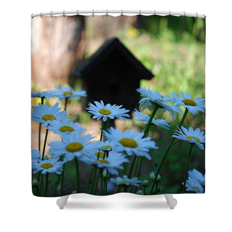 Daisy Shower Curtain featuring the photograph Daisy Garden by Lori Tambakis