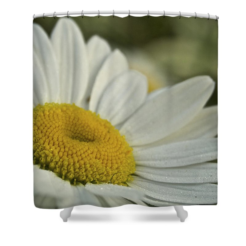 Flower Shower Curtain featuring the photograph Daisy by Michael Peychich