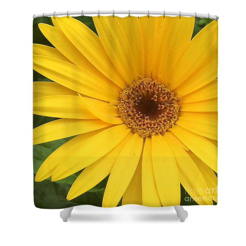 Pruddygurl Shower Curtain featuring the photograph Daisy by Pruddygurl Exclusives