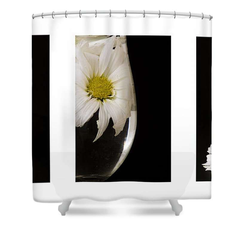 Flowers Shower Curtain featuring the photograph Daisy Triptych by Ayesha Lakes
