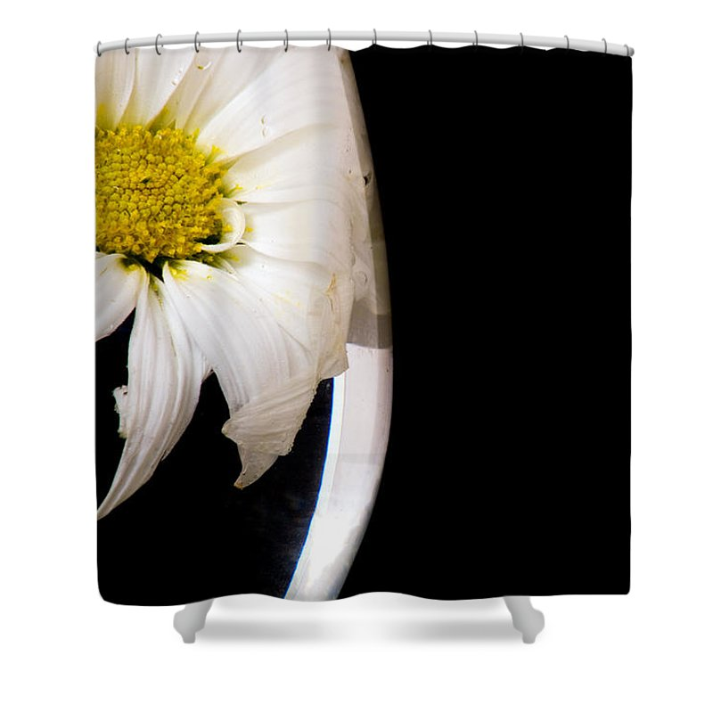Daisy Shower Curtain featuring the photograph Daisy Under Glass by Ayesha Lakes
