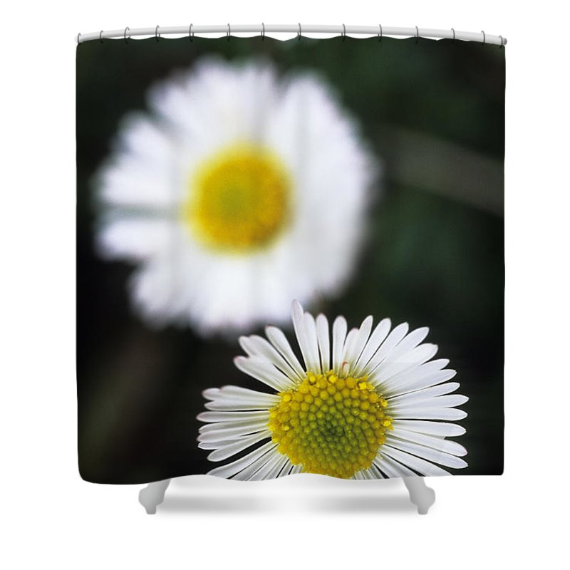 Afternoon Shower Curtain featuring the photograph Daisys by Carl Shaneff - Printscapes