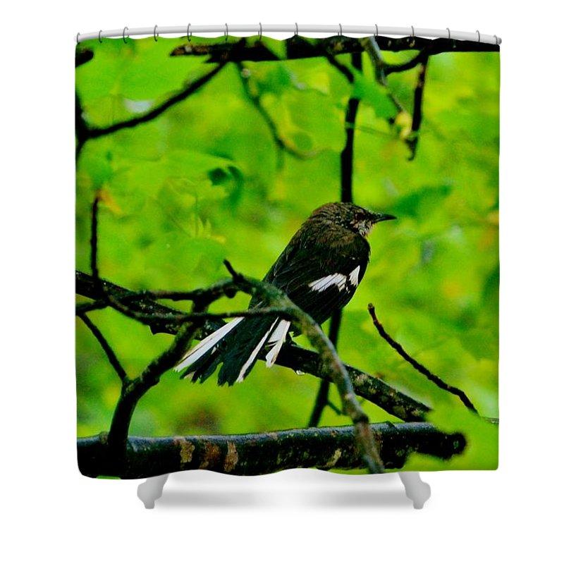 Bird Shower Curtain featuring the photograph Damaged by Eileen Brymer
