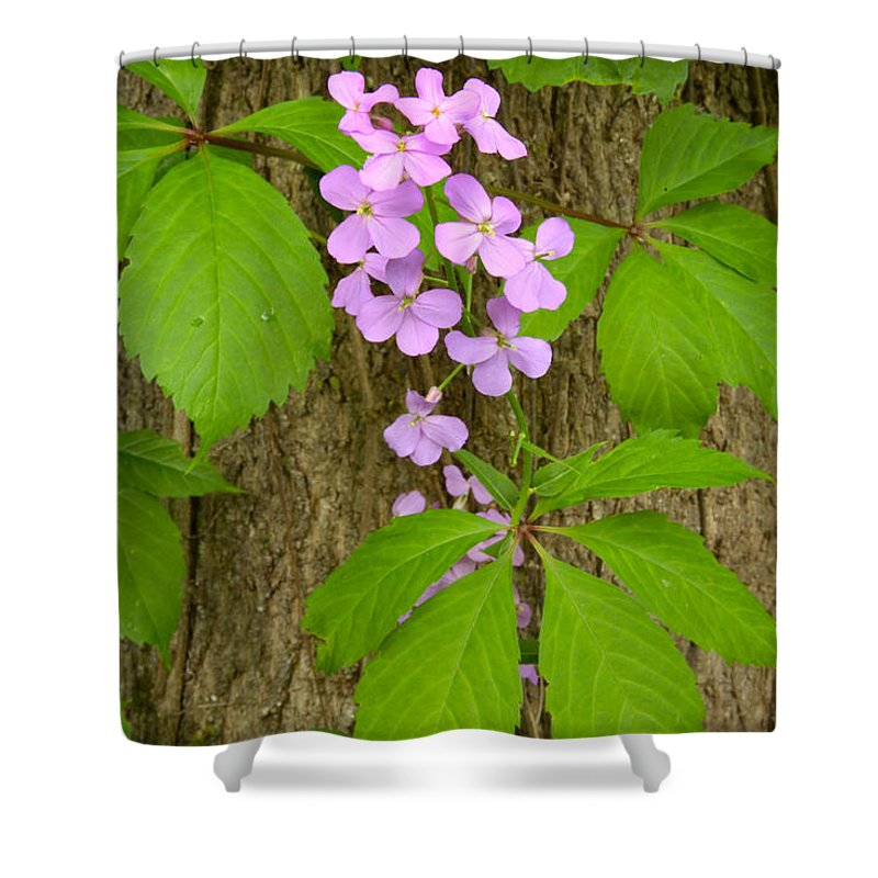 Wildflowers Shower Curtain featuring the photograph Dame's Rocket Wildflowers And Creeping Vines by Irwin Barrett