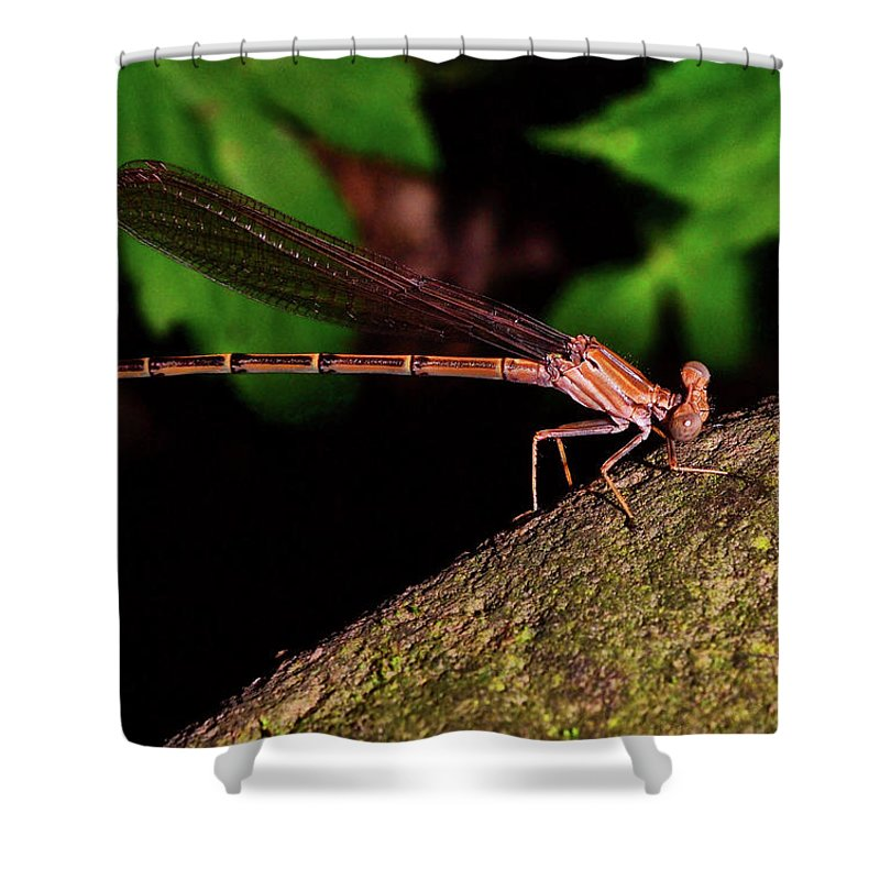 Macro Shower Curtain featuring the photograph Damselfly 006 by George Bostian