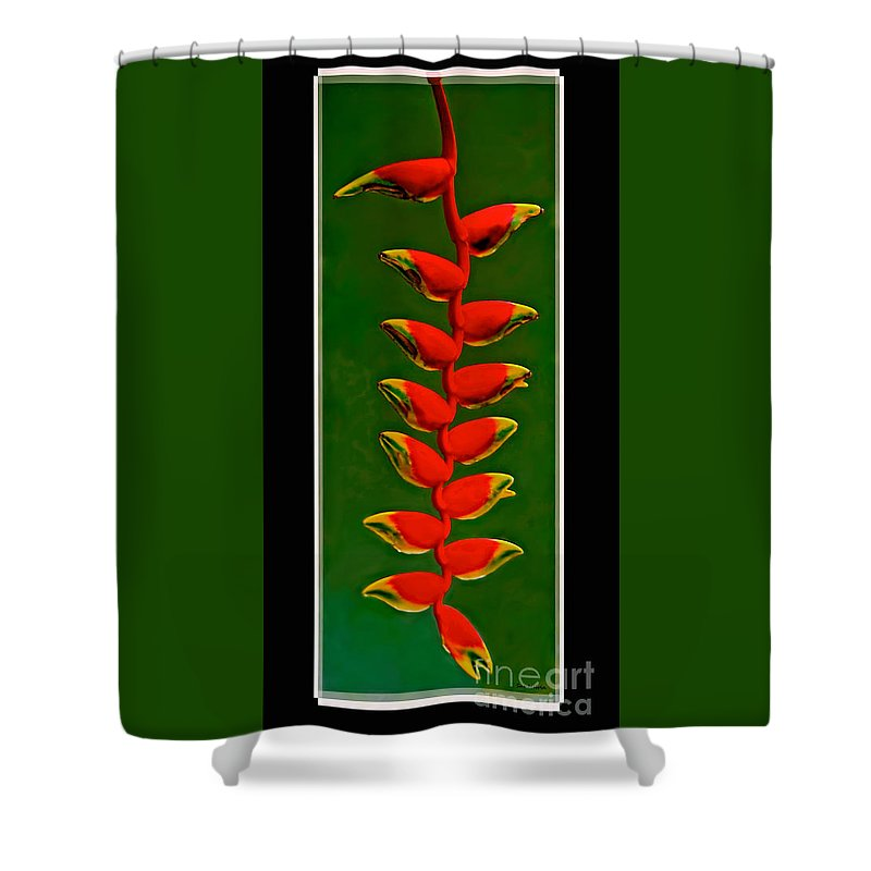 Flower Shower Curtain featuring the photograph Dance Of The Heliconias by Sue Melvin