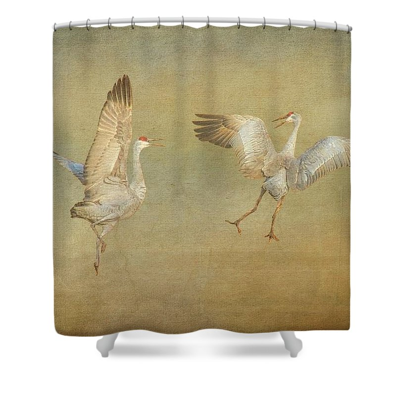 Nature Shower Curtain featuring the photograph Dance Ritual II, Sandhill Cranes by Zayne Diamond Photographic
