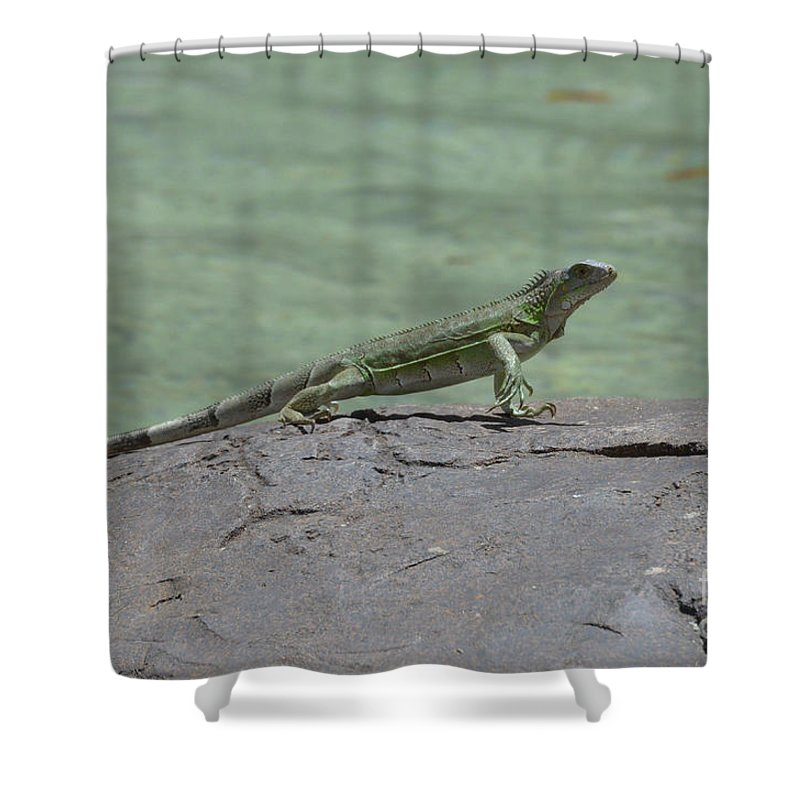 Iguana Shower Curtain featuring the photograph Dancing Iguana On Rocks Along The Water's Edge by DejaVu Designs