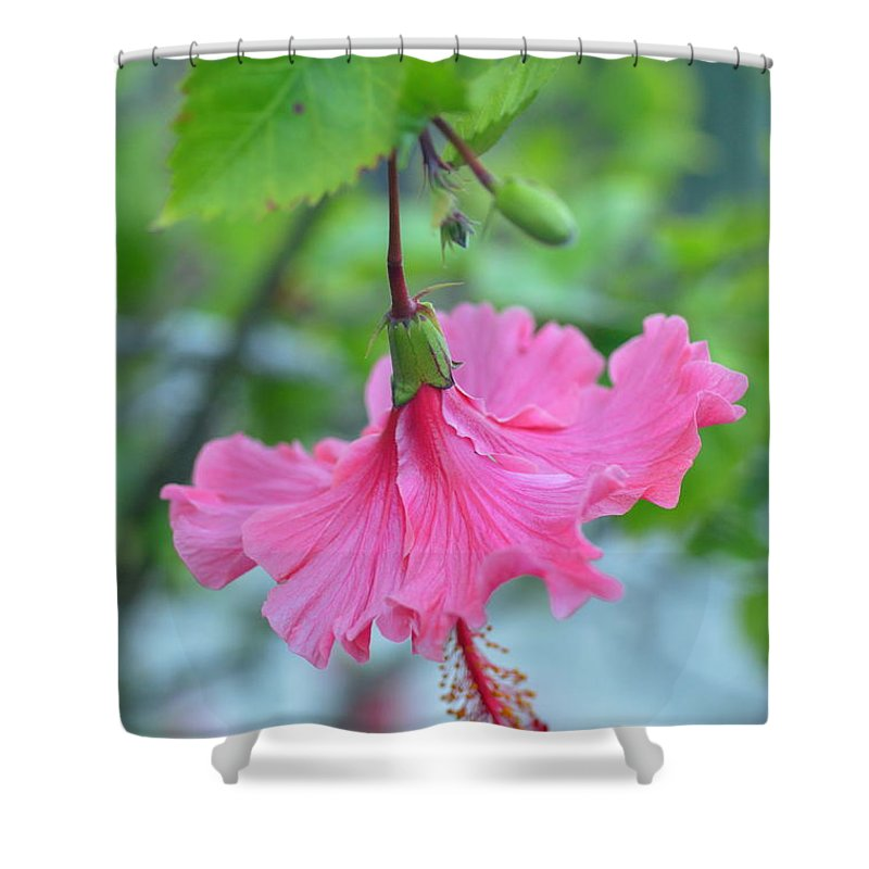 Flower Shower Curtain featuring the photograph Dancing Lady Pink Hibiscus by Amy Fose