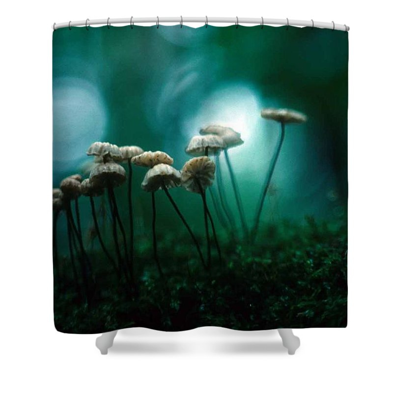 Parasol Mushrooms Shower Curtain featuring the photograph Dancing Parasol Mushrooms by Laurie Paci