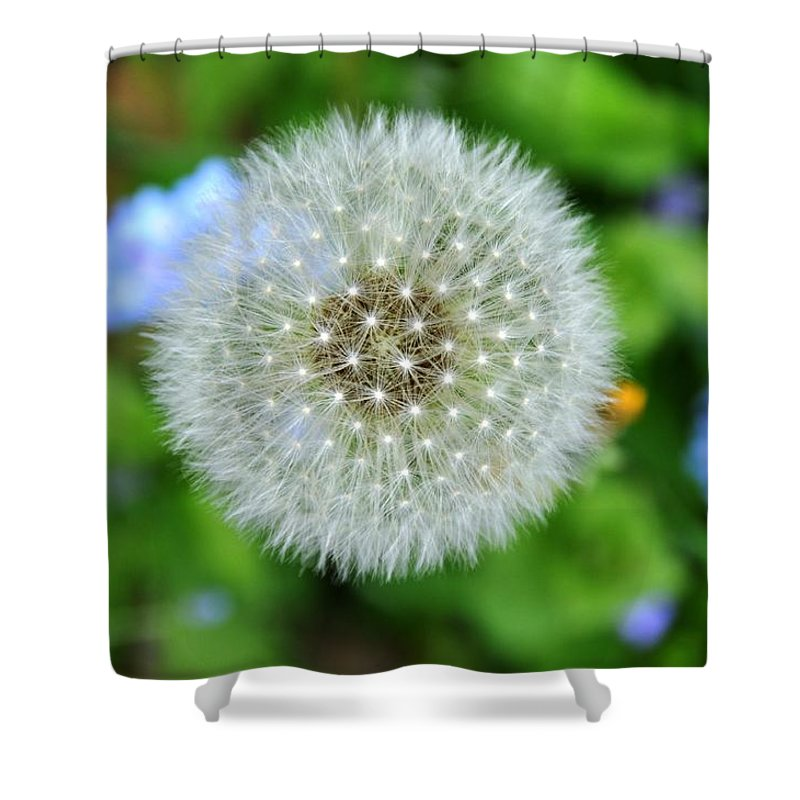 Flower Shower Curtain featuring the photograph Dandelion 2 by Rich Bodane