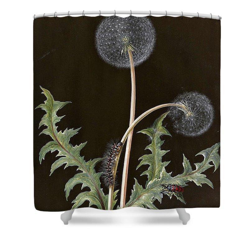 Barbara Regina Dietzsch Shower Curtain Featuring The Drawing Dandelion By