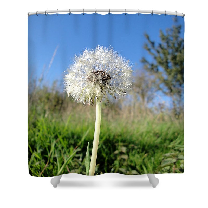 Dandelion Shower Curtain featuring the photograph Dandelion Clock by Susan Baker
