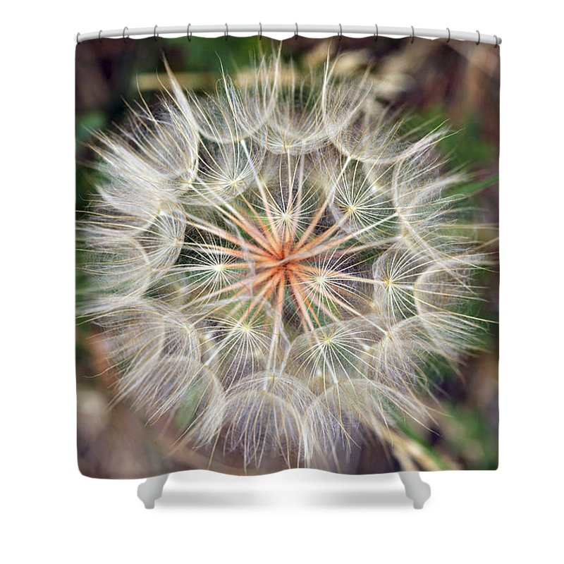 Dandelion Shower Curtain featuring the photograph Dandelion Fuzz by Marilyn Hunt