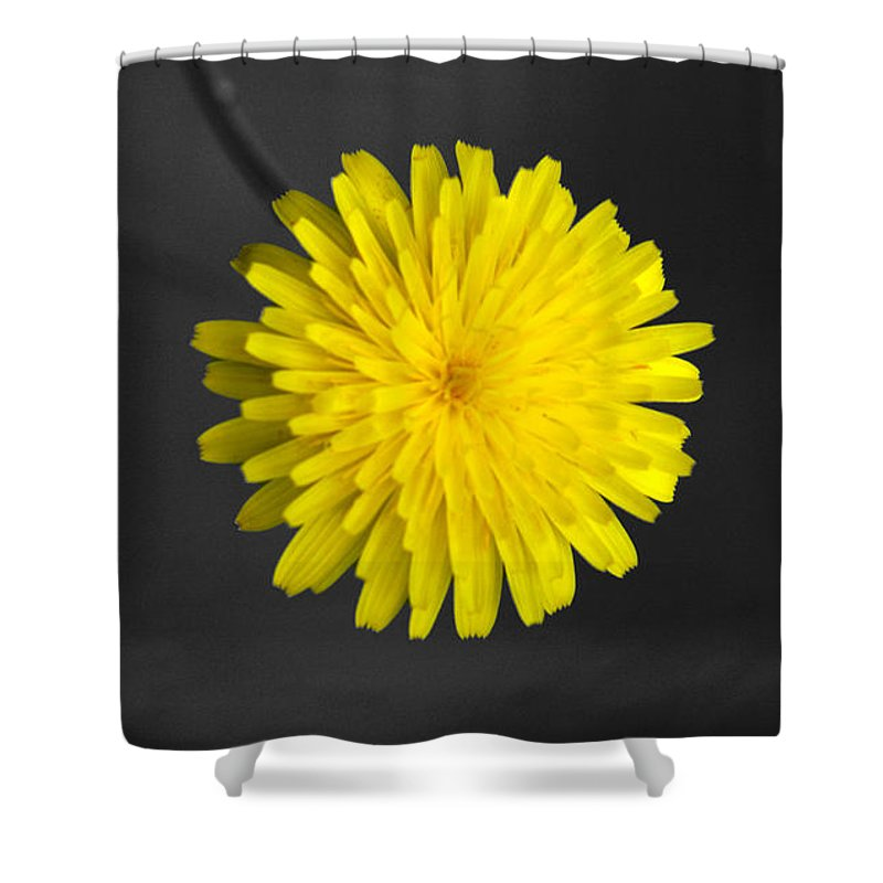 Floral Shower Curtain featuring the photograph Dandelion by Holly Kempe