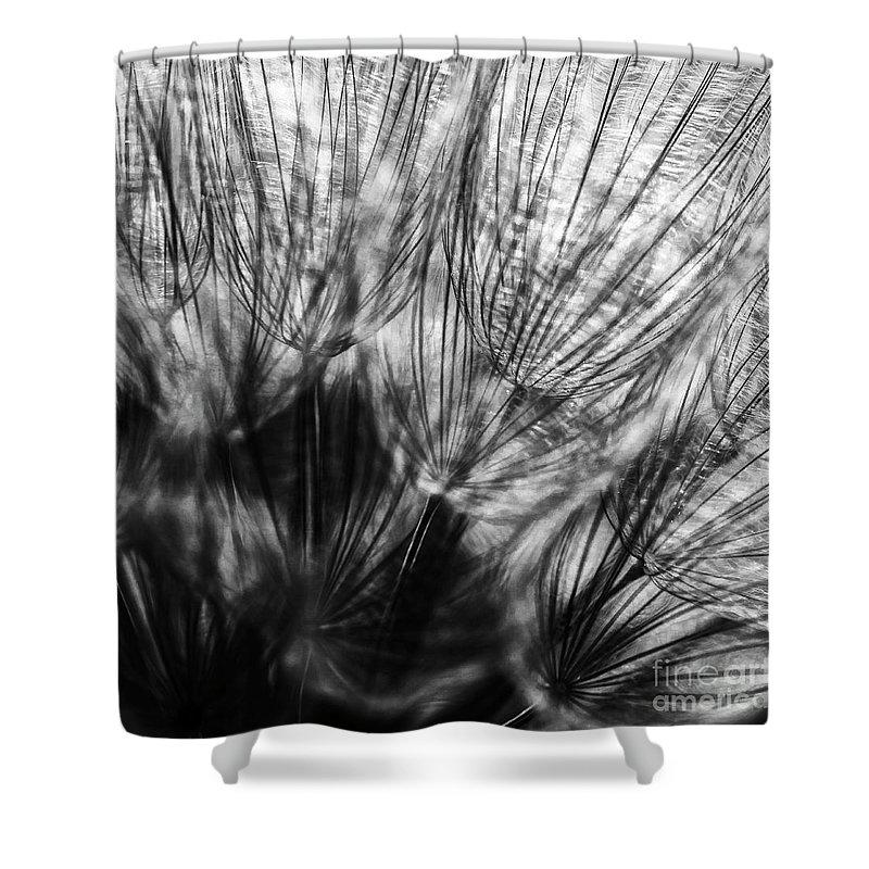 Allenfoto Shower Curtain featuring the photograph Dandelion Seeds I by Brad Allen Fine Art