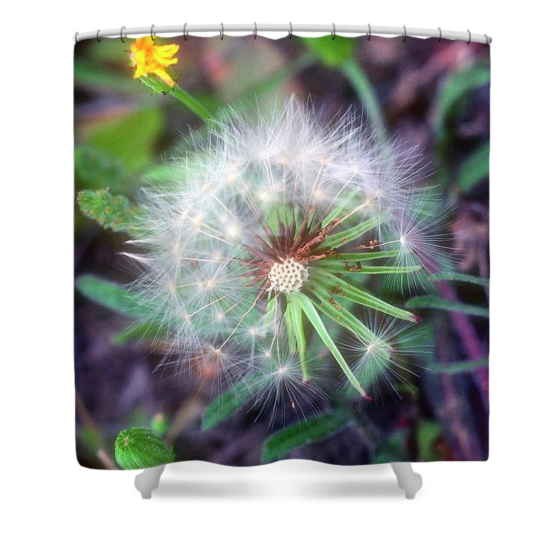 Flower Shower Curtain featuring the photograph Dandelion by Stephen Anderson