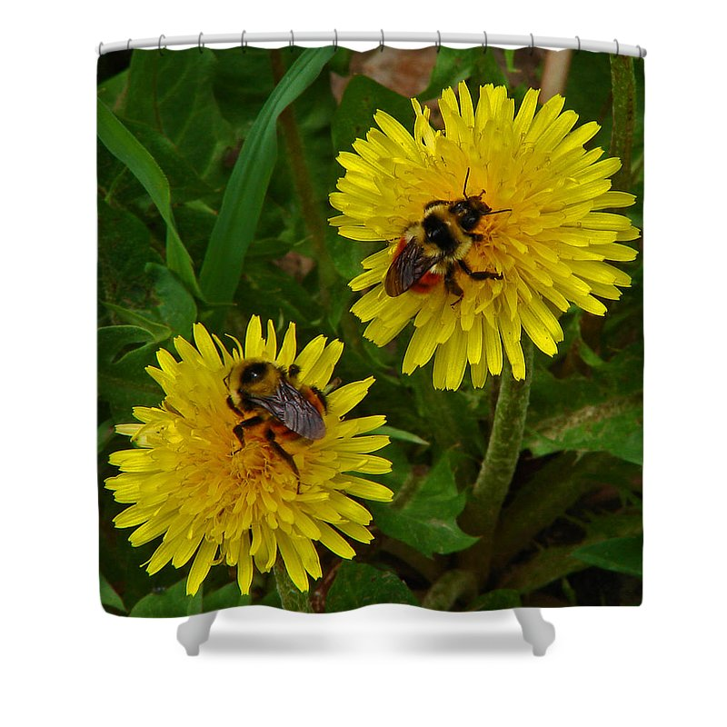 Dandelion Shower Curtain featuring the photograph Dandelions And Bees by Heather Coen