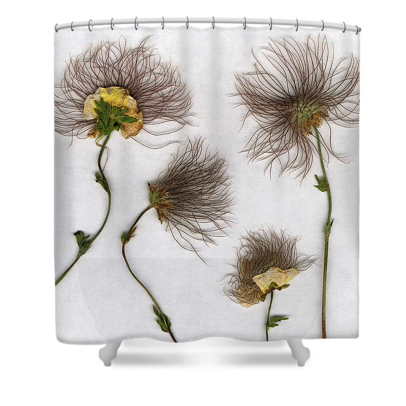 Dandelion Shower Curtain featuring the photograph Dandelions by Stefania Levi