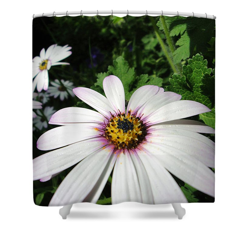 Flora Shower Curtain featuring the photograph Dandy Daisy by Susan Baker