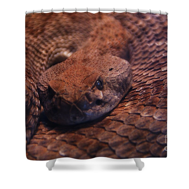 Rattlesnake Shower Curtain featuring the photograph Dangerously Handsome by Linda Shafer