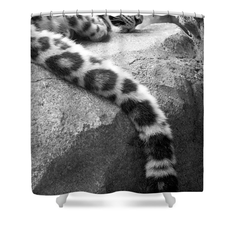 Leopard Shower Curtain featuring the photograph Dangling And Dozing In Black And White by Mary Mikawoz