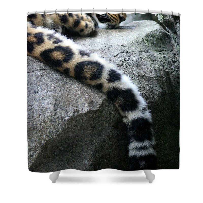 Leopard Shower Curtain featuring the photograph Dangling And Dozing by Mary Mikawoz