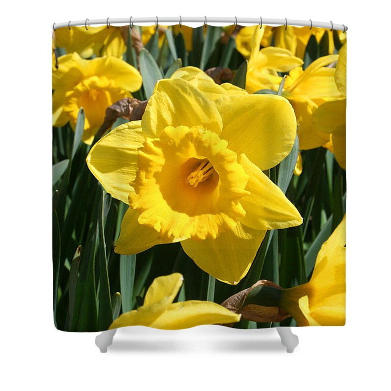 Daffodils Shower Curtain featuring the photograph Darling Spring Daffodils by Mary Gaines