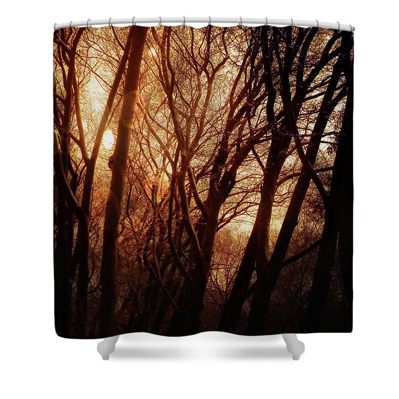 Trees Shower Curtain featuring the photograph Dawn In The Trees by Sean Dorazio