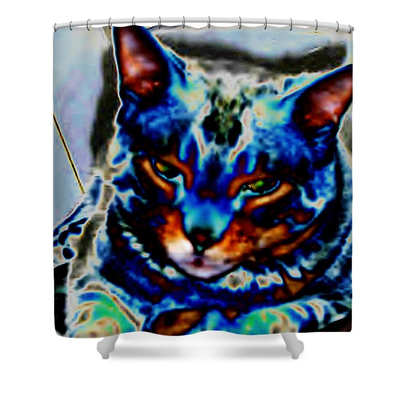 Cat Shower Curtain featuring the photograph Day Dreamer by Dawn Johansen