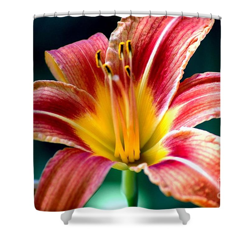 Landscape Shower Curtain featuring the photograph Day Lilly by David Lane