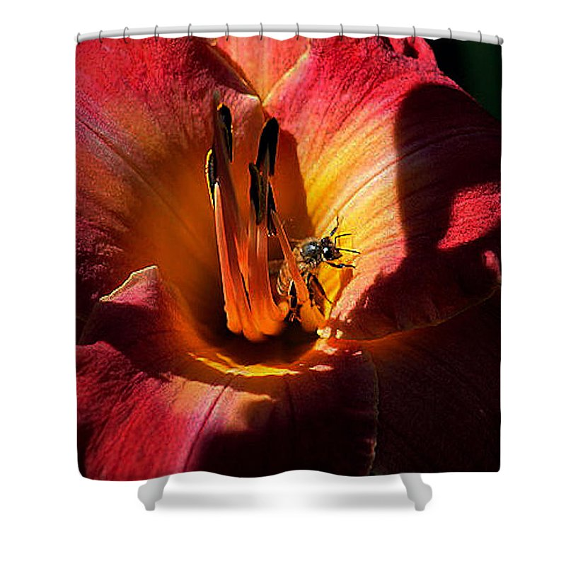Daylilies Shower Curtain featuring the photograph Daylily Collection # 19 by G Berry