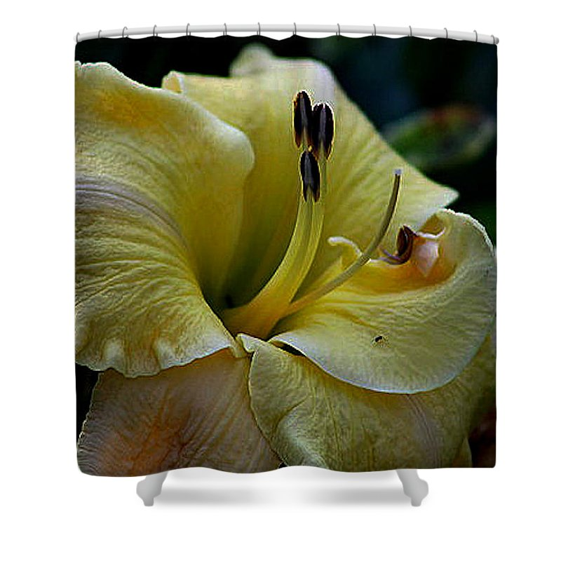 Daylilies Shower Curtain featuring the photograph Daylily Collection # 5 by G Berry