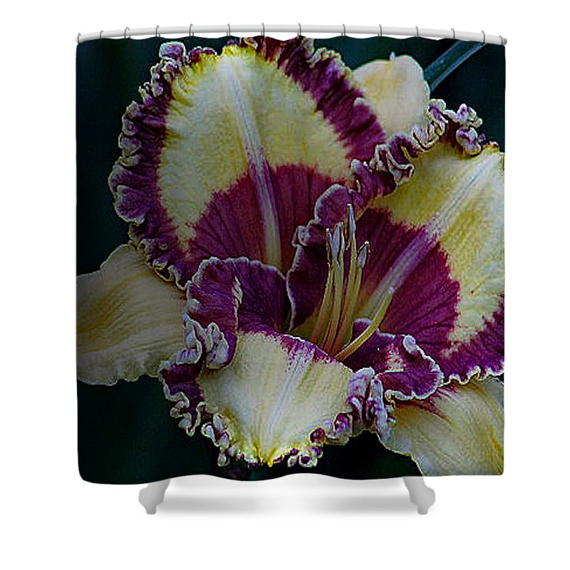 Daylilies Shower Curtain featuring the photograph Daylily Collection #9 by G Berry