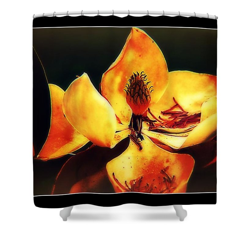 Flower Shower Curtain featuring the photograph Dead Magnolia by Vanessa Reed