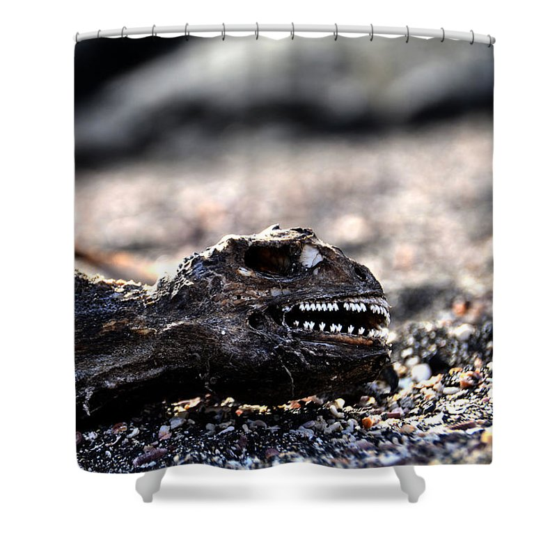Galapagos Shower Curtain featuring the photograph Dead Marine Iguana by Harry Coburn
