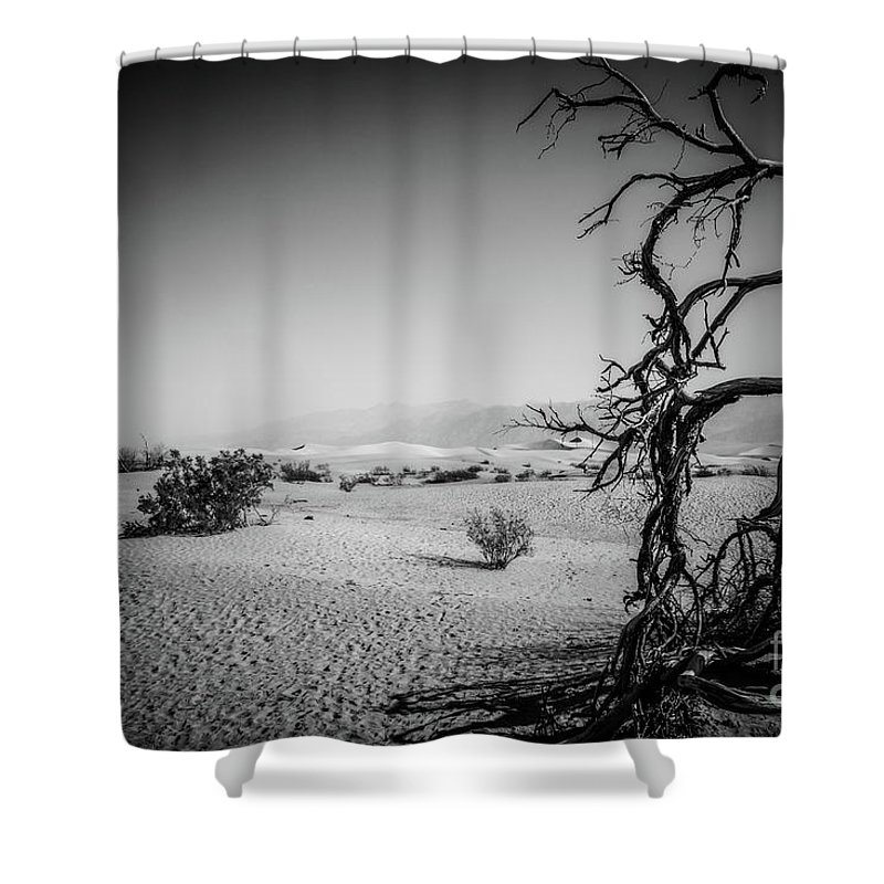 Nature Shower Curtain featuring the photograph Dead Tree by Mirko Chianucci