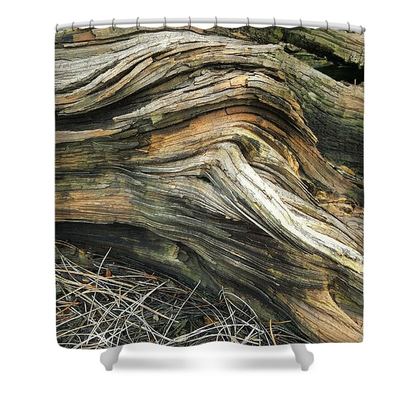 Tree Shower Curtain featuring the photograph Dead Tree Textures by Jim Thomas