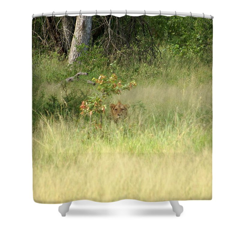 Lion Shower Curtain featuring the photograph Deadly Hide N Seek by Robert Hunter