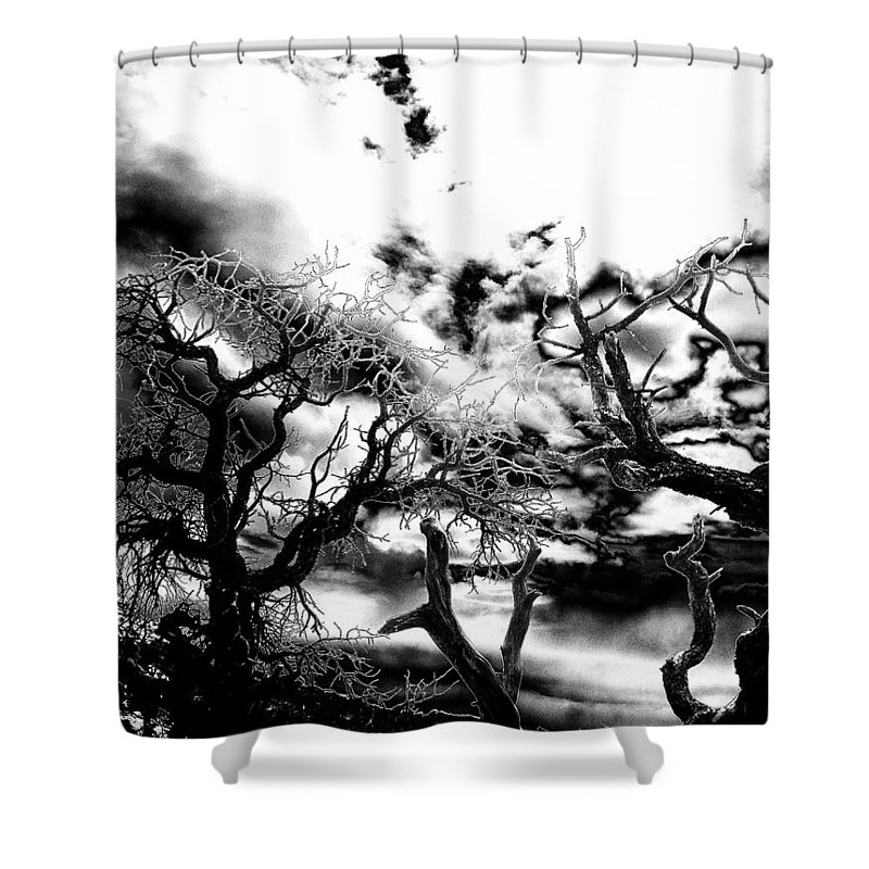 Tree Shower Curtain featuring the photograph Deadwood by Charleen Treasures