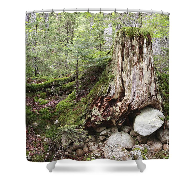 White Mountain National Forest Shower Curtain featuring the photograph Decaying Tree Stump by Erin Paul Donovan