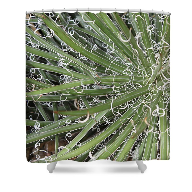 Nature Shower Curtain featuring the photograph Decorations by Munir Alawi