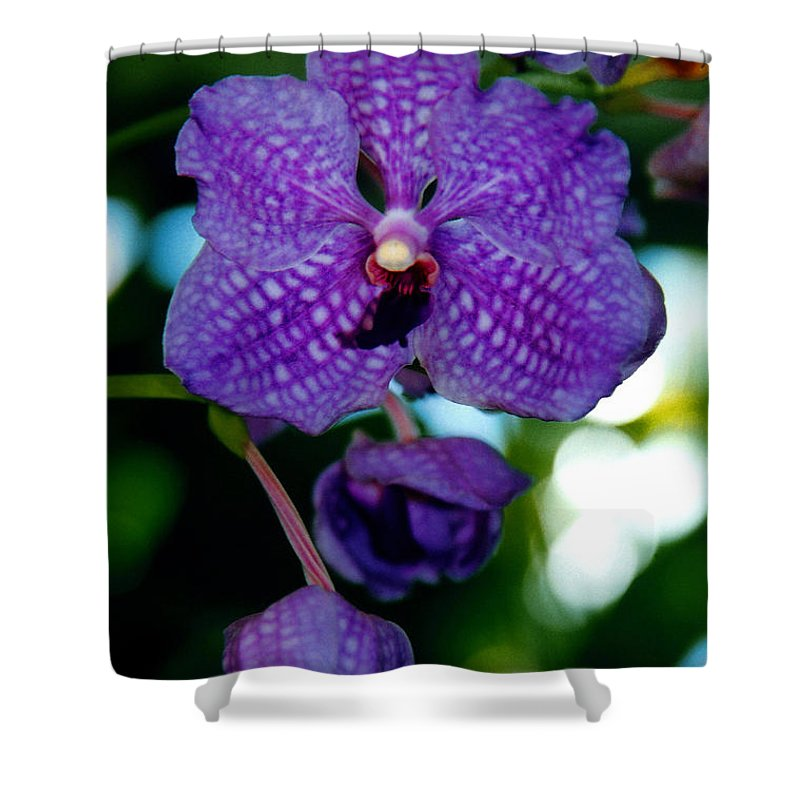 Orchid Shower Curtain featuring the photograph Deep Blue Orchid by Susanne Van Hulst