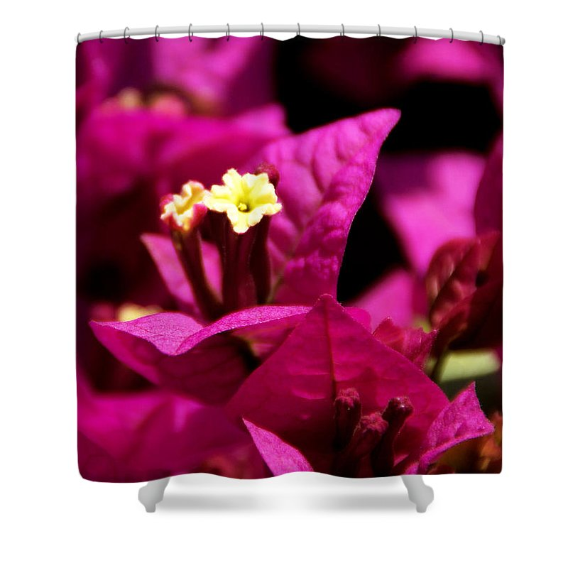 Bougainvillea Shower Curtain featuring the photograph Deep Desire by Linda Shafer