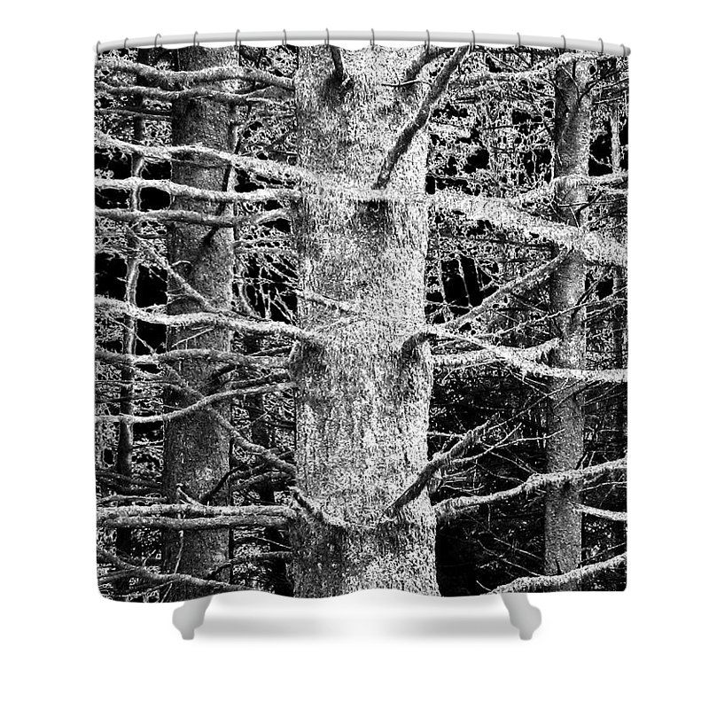 Woods Shower Curtain featuring the photograph Deep In The Woods by Will Borden