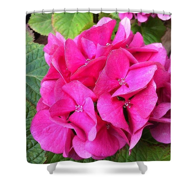 Deep Shower Curtain featuring the photograph Deep Pink by Cindy Riley