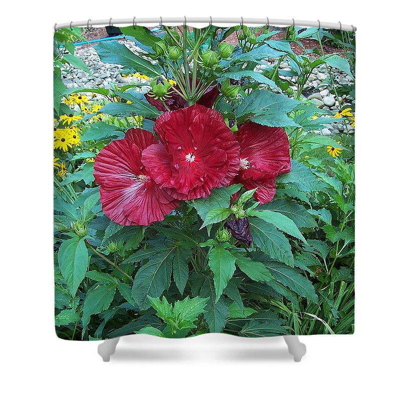 Deep Red Hibiscus Bush With Black Eyed Susans Shower Curtain For
