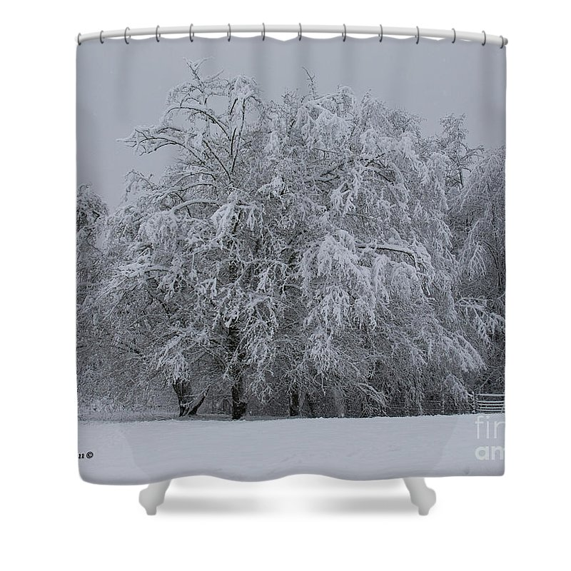 Oregon Shower Curtain featuring the photograph Deep Winter by Shari Nees