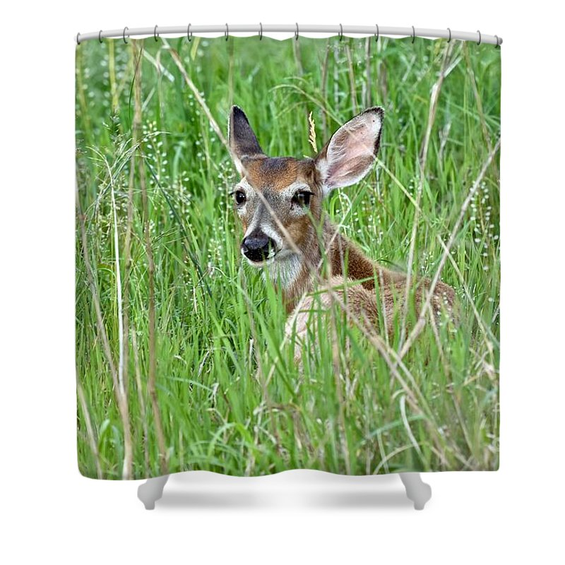 Animal Shower Curtain featuring the photograph Deer Bedded Down During Mid Day by Jeramey Lende