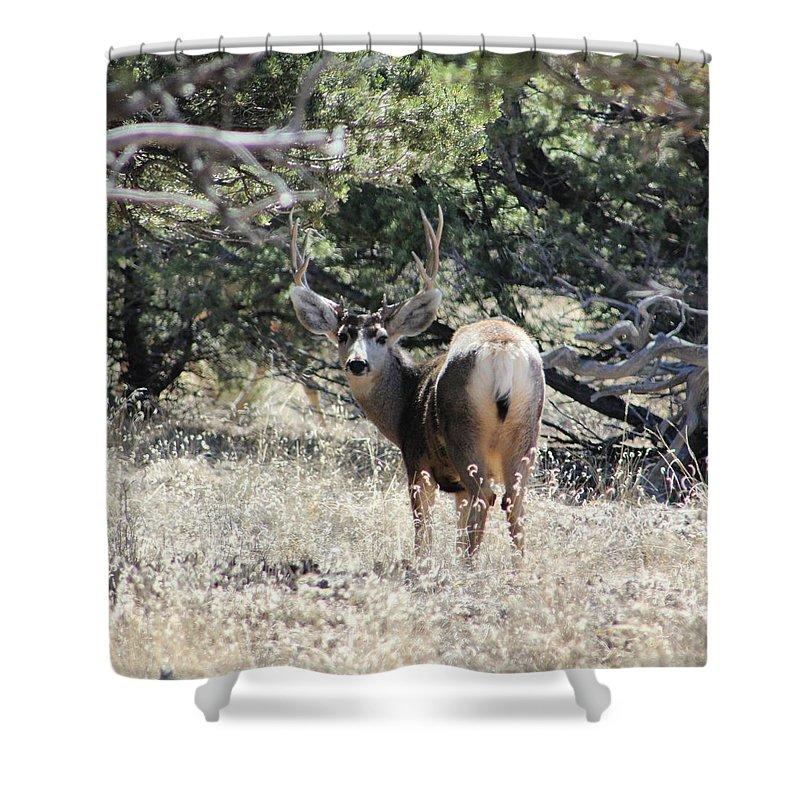 Deer Shower Curtain featuring the digital art Deer by Catie Shears